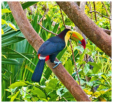 tucan,jungle, hotel eclipse, playa del carmen, riviera maya, mexico